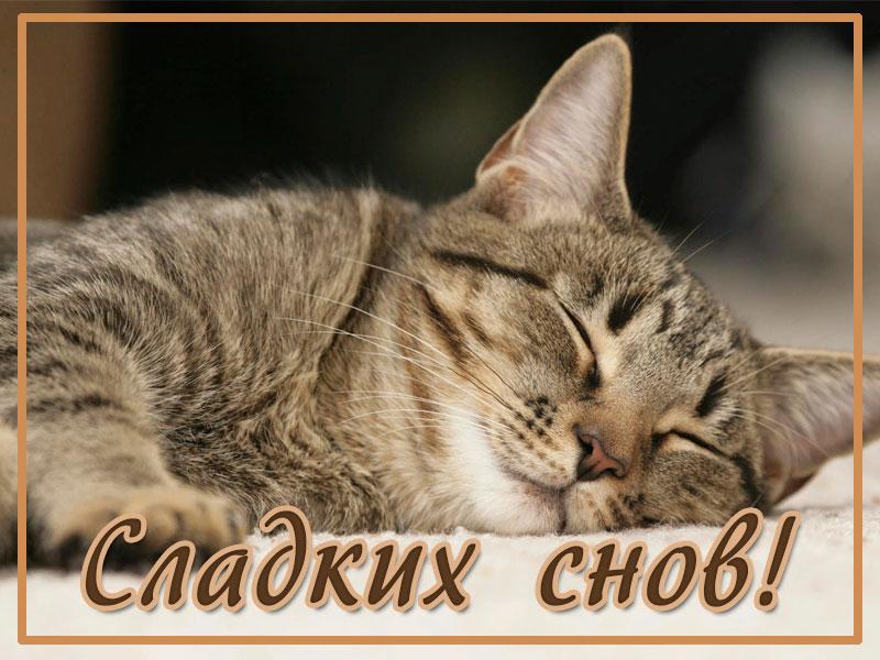 Сладких снов, котенок