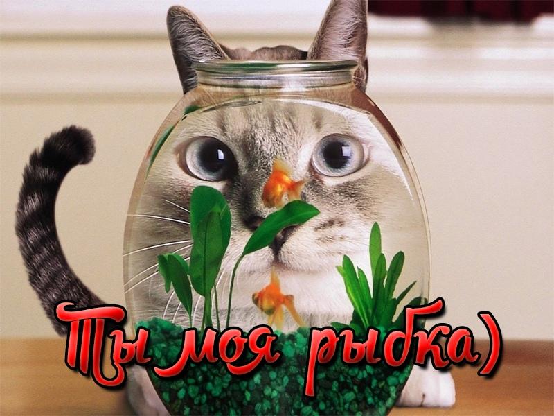 Ты моя рыбка