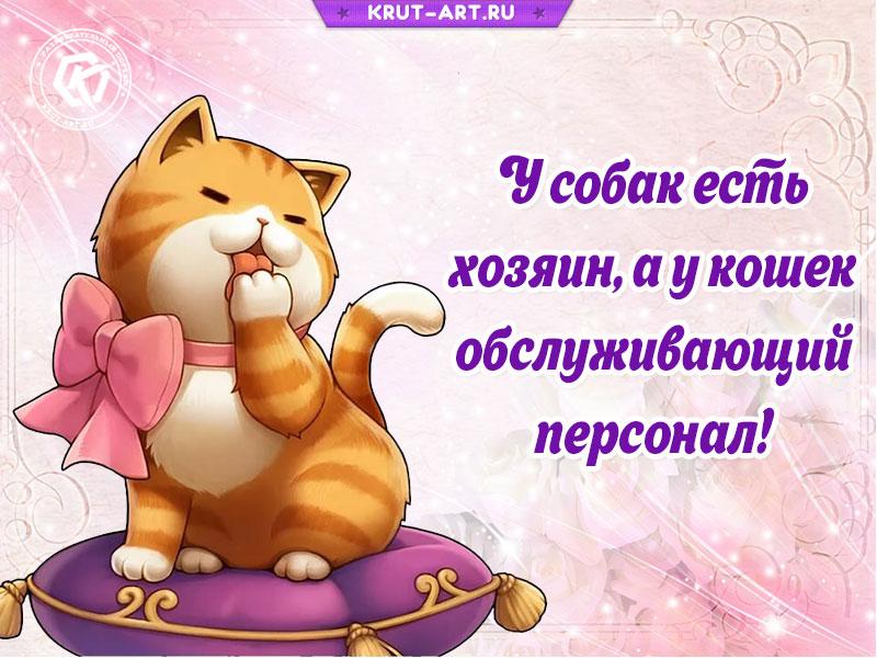 Забавная открытка о котах и собаках