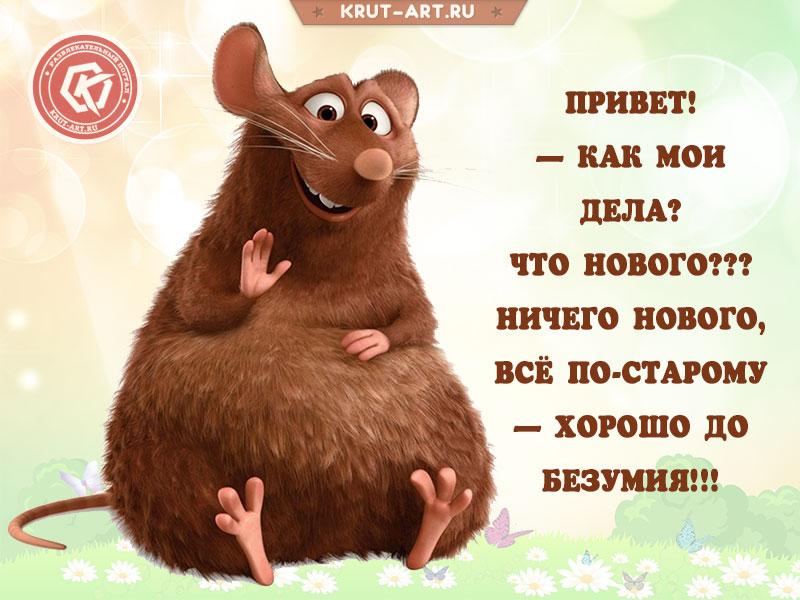 Смешная открытка-приветствие