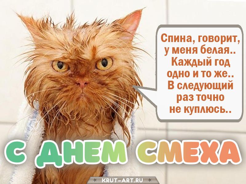 День смеха, смешная открытка с котом