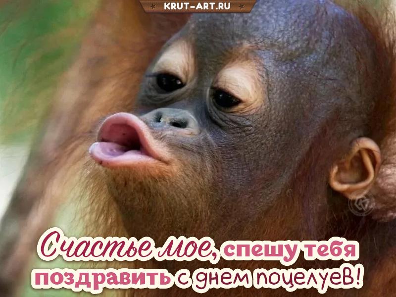 Всемирный день поцелуя смешная картинка