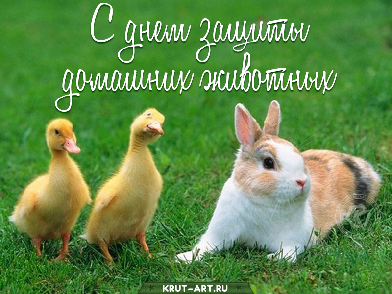 День защиты домашних животных