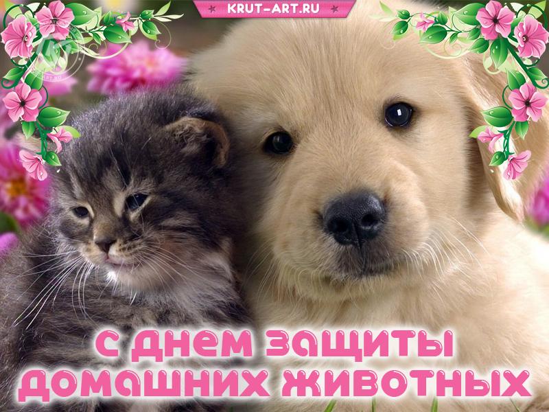 С днём защиты домашних животных