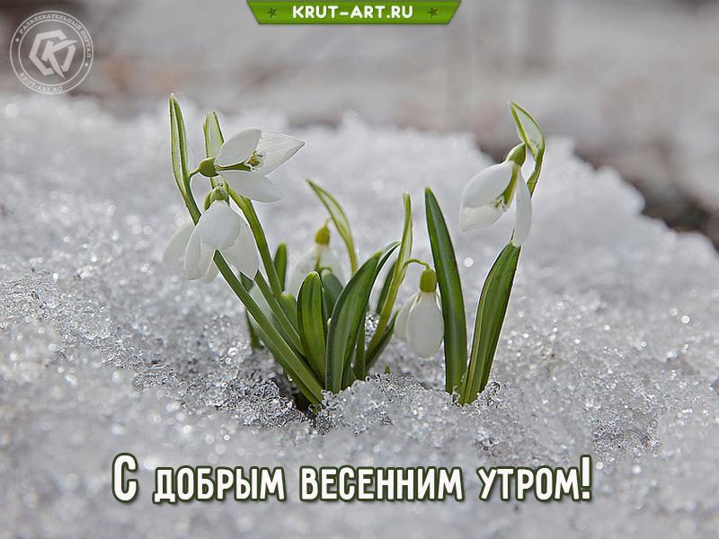 С добрым весенним утром!