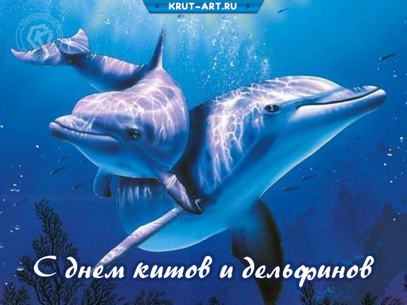 С днем китов и дельфинов